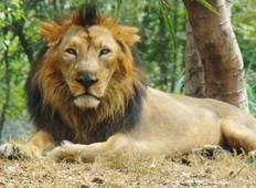 6-Day Wildlife Tour of Gujarat from Ahmedabad Tour