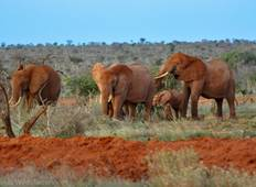 3 Day Amboseli & Tsavo West National Park Safari From Nairobi Tour