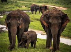 Sri Lanka Classic Tour - 7 Days 6 nights  Tour