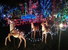 Christmas in Vancouver,Capilano Canyon Lights & Bright Night in Stanley Private Tour