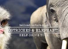 Ostriches and Elephants - Standard Package Tour
