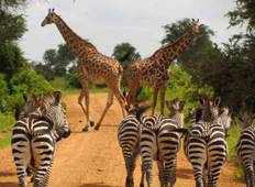 3 Days - Mikumi National Park Wildlife Safari Tour