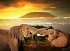 3 Day Best of Tsavo East & Tsavo West Wildlife Safari From Mombasa Tour