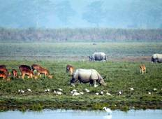 Kaziranga National Park & Guwahati Tour