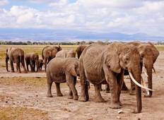 Kenya & Tanzania Budget Safari - 8 Days Tour