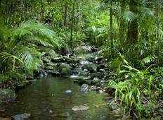 5 Day Daintree Rainforest & Port Douglas Tour (Valid April 2020 - March 2022. PVOD) Tour