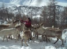 The Tsaatan Reindeer Herders in the snow 2021 Tour