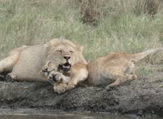 5 -Days Northern Tanzania  Safari - A Tour