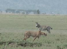 11-Day Northern & Southern Tanzania Safari  Tour
