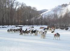 Dogs sledding and horse riding trip in Mongolia 2022 Tour
