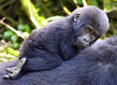 Classic Best Gorilla Experience & Northern Tanzania Expedition  Tour