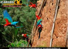 Macaw Clay Lick & Sandoval Lake 4 Days/3 Nights Tour