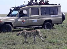 Private Safari of 7 Days in the Northern Parks of Tanzania + Zanzibar Beach Extension of 7 Days Tour