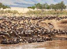 Private Safari of 8 Days in the Northern Parks of Tanzania Great Migration Special August September Tour
