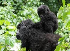 11 Days – Uganda\'s Total Primates and Encounter in the Wildest Places Tour