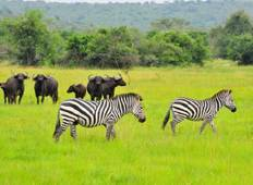 1 Day short Safari to Lake Mburo National Park Tour