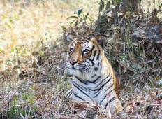Private India Cultural Golden Triangle With Wild Tiger  Tour
