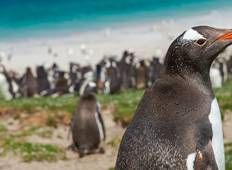 Christmas & New Year in Antarctica, South Georgia & Falklands Tour