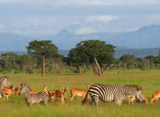 3 Days 2 Nights Ruaha Wildlife Safari  Tour