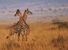 Safari in Kenia: Masai Mara Nationalpark, See Naivasha & Aberdare Nationalpark - 6 Tage Rundreise