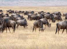 7-Day Journey of the Wildebeest - High-End  Tour