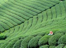 10 days Round Taiwan Tea Origin Tour Tour