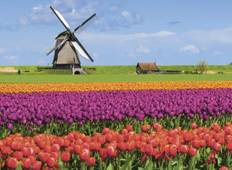 Windmills, Tulips & Belgian Delights with London Tour