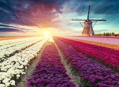 Windmills, Tulips & Belgian Delights with Bruges Tour