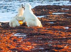 5 Night Churchill Town and Tundra Adventure Tour