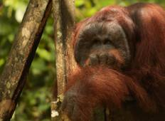 Borneo Photographic Tour – Photograph the wildlife of the jungles of Sabah Tour