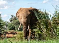 Kenya Exclusive Safari - 7 Days Tour