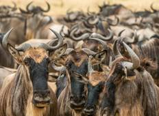 5 Days Wildebeest Migration Safari 2020 - Kenya Tour