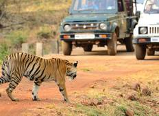 Nationalpark Tadoba Safari Rundreise