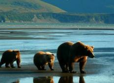 Alaskan Wilderness Tour