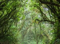 Mystic Forests of Costa Rica Tour