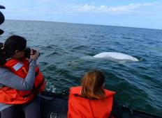 Belugas, Bears and Blooms Enthusiast  Tour