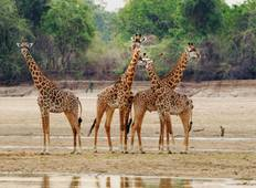 10-Day South Luangwa, Mana Pools & Victoria Falls Tour