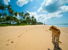 PMGY Dog Rescue Volunteer in Sri Lanka  Tour