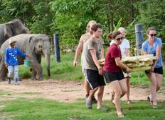 Plan My Gap Year: Volunteering zum Elefantenschutz in Thailand Rundreise