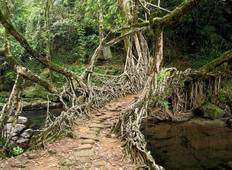 6-Day Tour of Exotic Northeast India: Mawsmai Caves, Double Decker Living Root Bridge and Kaziranga National Park Tour