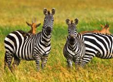8 Day Jewels of Tanzania Fly-in Safari Tour