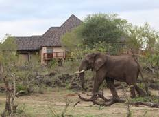 Kruger Nationalpark Private Lodge & Panorama Safari - 5 Tage Rundreise