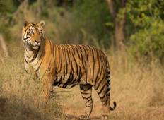 North India Wildlife Tour Tour