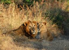 Gujarat Wildlife and Temples Tour
