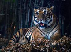 Incredible Wildlife Safari in Bandhavgarh, Kanha & Pench National Parks Tour