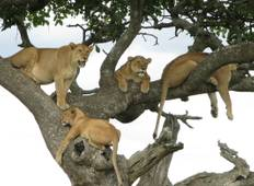 3-Days Tanzania Northern Circuit Lodge Safari:  Lake  Manyara, Ngorongoro & Tarangire National park Tour