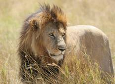 Splendors of South Africa & Victoria Falls with Chobe National Park & Maasai Mara Tour