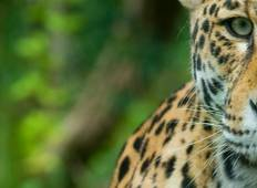 6 Days Experience @ North Pantanal - Following the footsteps of the Jaguar - Brasil **new** Tour
