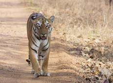 Bangalore to Mysore & Nagarhole National Park Tour