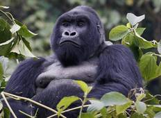 Ultimative Gorilla Safari - 3 Tage  Rundreise